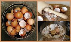 Let's start with a few fun facts about eggshells: Eggshells are made of calcium carbonate, they are also one of the main components in certain antacids (a medicine that prevents or corrects acidity, especially...