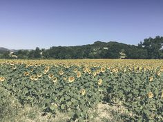 dèrrive travel - a day in cassis, france. where to go and what to do. sunflower fields. www.derrive.com