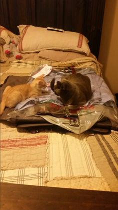 We love to help pack!