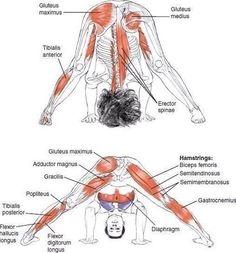 Enjoy The Amazing Ashtanga Yoga Practice - Yoga breathing Ashtanga Yoga, Bikram Yoga, Iyengar Yoga, My Yoga, Fitness Workouts, Yoga Fitness, Yoga Muscles, Abdominal Muscles, Yoga Meditation