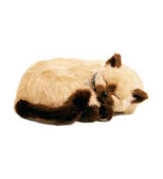 Siamese Perfect Petzzz---insert the batteries, and this kitty will sleep on your lap with his chest rising and falling with each sleepy breath! So cute!