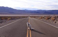 Uratował psa i ruszyli w podróż po USA. Zobaczcie zdjęcia! (GALERIA)