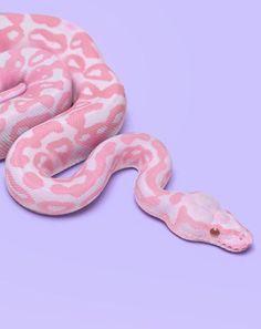 Pink Snake                                                                                                                                                                                 More