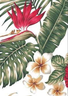 30wili - featuring plumeria, bird of paradise, & hibiscus, flowers on a cotton apparel fabric. Its also available in black and blue as well. More fabrics at: BarkclothHawaii.com