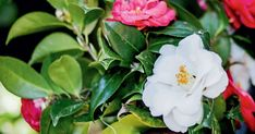 Garden Yard Ideas, Lush Garden, Garden Tips, Propagation, Herb Spiral, Air Layering, Middleton Place, Manor Garden, New Roots
