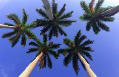 High five. Courtesy of FtLauderdaleSun.