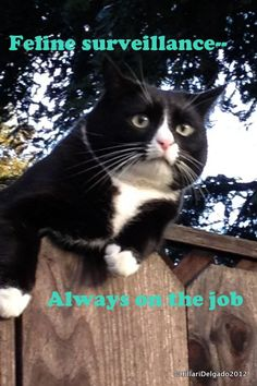 Feline surveillance--always on the job with the best video surveillance software - Xeoma.
