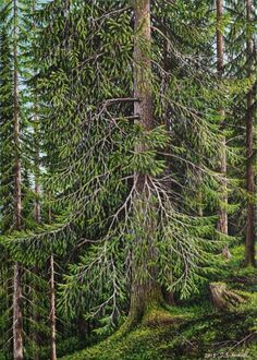 """Fichte. Österreich"" 2015, Öl, Leinwand, Unikat, signiert, datiert #art #onlineatelier #artworks"
