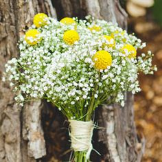 Bridesmaid bouquets.  Baby's breath (with mini sunflowers) throughout, wrapped in burlap and pearls