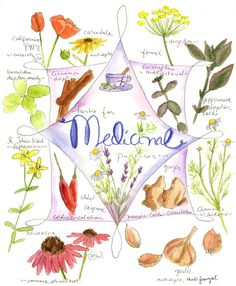 Medicinal Herb Chart WANT TO FRAME THIS. .. FOR KITCHEN :) BEAUTIFUL Art and useful.