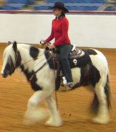 Fort Worth Stock Show - Gypsy Horse