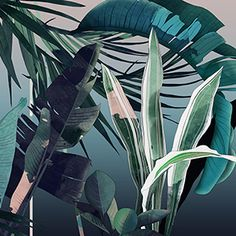 All 3 illustrations were design and drawn for Area Environments. All are available as a wallpapers here.   Tropical Forest Garden