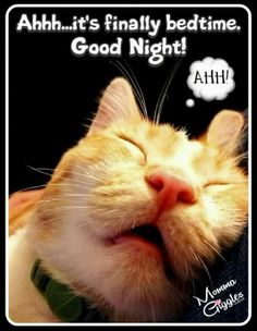 Good Night and Sweet Dreams 😺🌹🙏 Good Morning Friday, Good Morning Good Night, Good Night Quotes, Happy Friday, Good Night Funny, Good Night Greetings, Night Wishes, Nighty Night, Cute Kittens