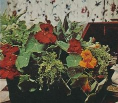 An arrangement in the Winter Town House by Sister's daughter, Apple.