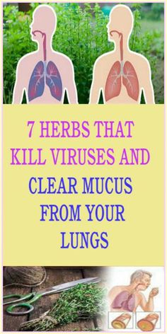 7 Herbs That Kill Viruses and Clear Mucus from Your Lungs – Herbal Medicine Book Lung Infection, Viral Infection, Medicine Book, Herbal Medicine, Natural Medicine, Decongestant, Cough Syrup, Natural Living, Organic Living