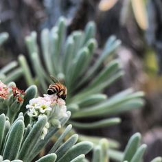 #abeja #bee #nature #mindfulness #photography #photo #beach #observer