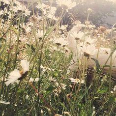 daisy dog Daisy Dog, Dogs, Cute, Plants, Pet Dogs, Kawaii, Doggies, Plant, Planets