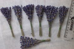 Mini dried lavender bunches 12cm pack of 5 by DaisyShopUK on Etsy, £3.99