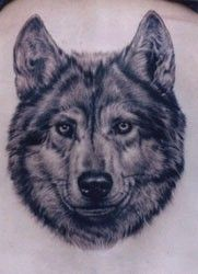 Grey Ink Wolf Head Tattoo Image