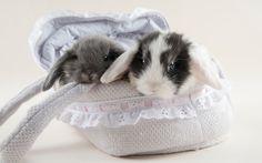 CONEJOS - Cómo domesticar a los conejos. Consejos útiles para perder el ...