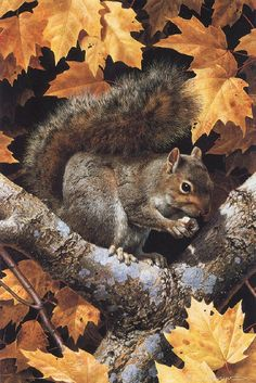 """Golden Season - Gray Squirrel by Carl Brenders. """"Nature created this scene, but as an artist I could not resist capturing the gray squirrel with the colorful yellow and red leaves of fall in a painting. Print released in Vida Animal, Mundo Animal, Fall Pictures, Animal Pictures, Beautiful Creatures, Animals Beautiful, Animals And Pets, Cute Animals, Tier Fotos"""