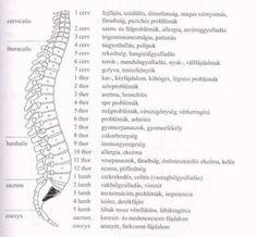 Térkép: Csigolya Térkép Word Search, Words, Arm, Human Body, Arms, Horse