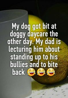 """My dog got bit at doggy daycare the other day. My dad is lecturing him about standing up to his bullies and to bite back """