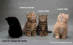 INFJ Meyer's Briggs Kitty cat cats kittens this is how different the INFJ is compared to most