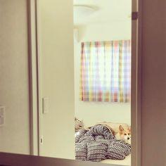 Today's komsan❤︎ #myfavcorgi #corgi #corgilife #corgilove #corgination #corgistagram #dog #dogstagram #短足犬 #boy #🐾 #family #bedroom #愛犬 #こむぎ #love #lovemydog #lovelife