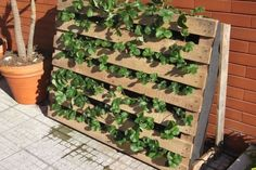 Pallet Used as Strawberries Garden Flowers, Plants