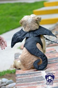No tutorial. Dog harness dragon wings and tail costume inspiration. Great idea for dogs who can't wear big costumes