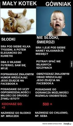 Mały kotek vs. gówniak Polish Memes, Weekend Humor, Funny Mems, Everything And Nothing, Grumpy Cat, Wtf Funny, Man Humor, Good Mood, Best Memes