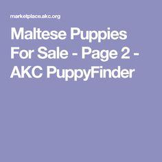 Maltese Puppies For Sale - Page 2 - AKC PuppyFinder