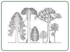 Francis Hallé. Modèles unitaires et colonaires (réification) de plantes.