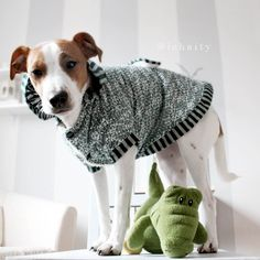 Riley a Jack Russell is modeling his new Fetch sweater hoodie. Also available in pink $21.99 www.fetchdogfashions.com #puppy #dog #dogclothing #dogapparel #dogboutique #dogcouture #petboutique #doghoodie #custommade #designer #cute #cutedog