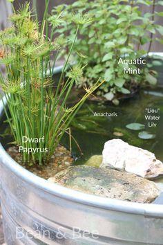 pond plants for the stock tank pond via beanandbee.com