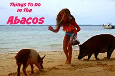 7 Things You Need To Do In the Abacos