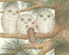 owls and mouse. Ratón y buhos.