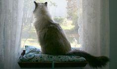 DIY Cat Window Perch   Shelterness