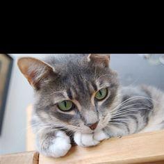 Trixie! My grand kitty.