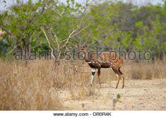 Image result for mole national park deer cam