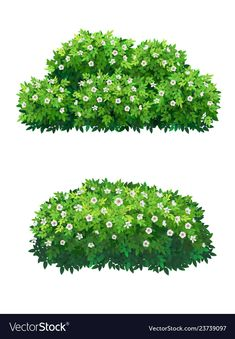 Green bushes and tree crown with white flowers vector image on VectorStock Plant Illustration, Landscape Illustration, Bush With White Flowers, Bush Drawing, Art Watercolor, Green Fence, Acrylic Artwork, Affinity Designer, Digital Painting Tutorials