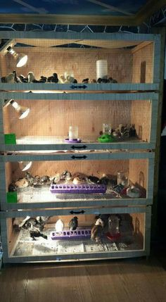 Have each weeks hatchlings together.  Have 4 tall then week 5 transition them to brooder with run and partial access.