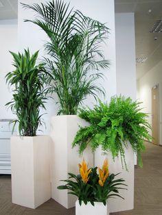 Озеленение офисов ДонСтрой Девелопмент | Портфолио реализованных проектов компании «Флориста»