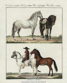 Breeds of horses 18th century.