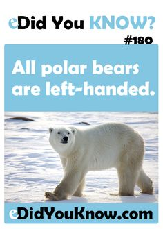 Did you know all polar bears are left-handed? Wtf Fun Facts, True Facts, Funny Facts, Random Facts, The More You Know, Good To Know, Just For You, Did You Know Facts, Things To Know