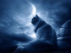Moon, cat, blue,