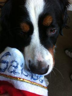 Dogmas stocking from my beau Cody!