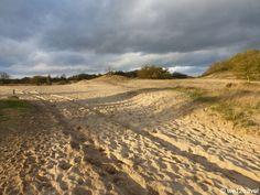 Loonse en Drunense Duinen NP, The Netherlands
