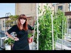 Gardenieres: Meet the North East Gardeniere Pamela Reed Roof top container vegetable garden